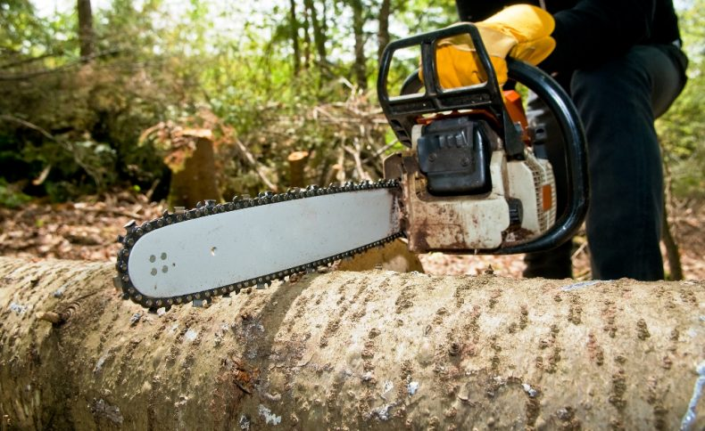 Let's 'Ban Chainsaws' in Terengganu