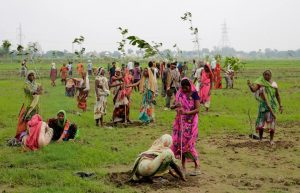 Indian villagers plant trees in a collective initiative to improve their environmental landscape. Photo Credit: AP