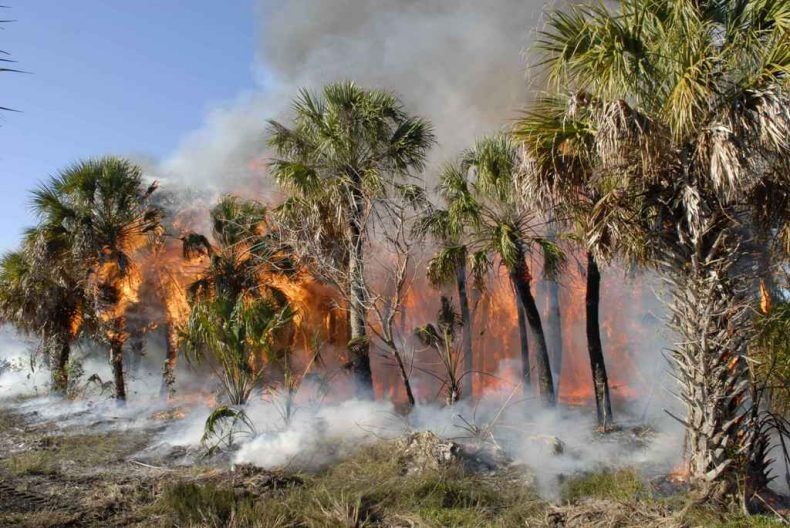 Lower Kinabatangan fire raises Alarms
