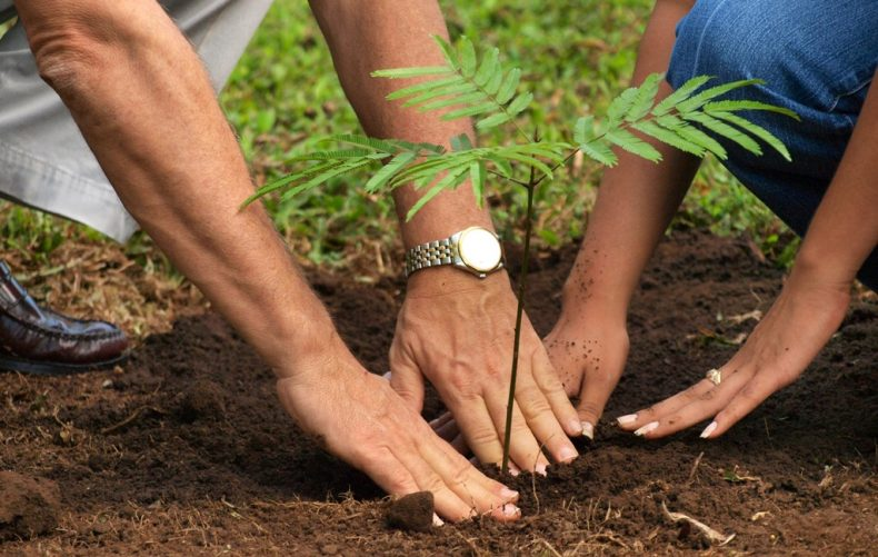 India's Record-breaking Tree-planting Feat should be an Inspiration for Us