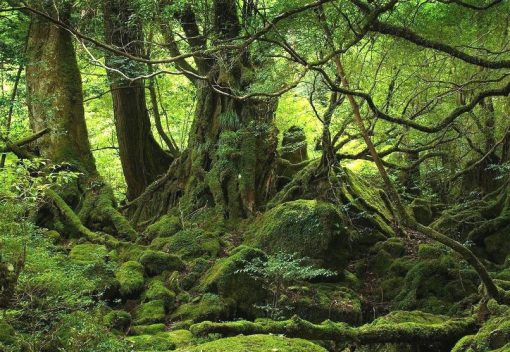 Trees are caring 'Social Beings'