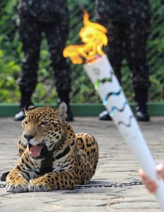 A jaguar used at an Olympic torch ceremony was later shot dead. Photo Credit: YouTube