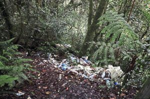 Piles of trash discarded by visitors near a boardwalk litter a scenic part of the Mossy Forest. Photo Credit: The Star Online