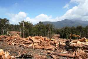 A logged forest makes for a sad sight. Photo Credit: Emma Capp via The Observer Tree