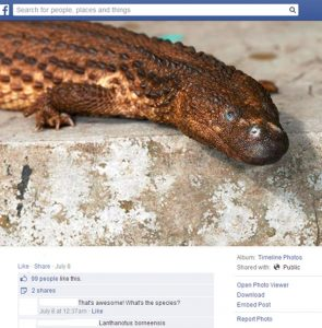 An earless monitor is offered for sale online. Photo Credit: TRAFFIC
