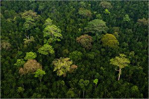 The forests of Sarawak are home to a stunning diversity of wildlife. Photo Credit: Design Sigh