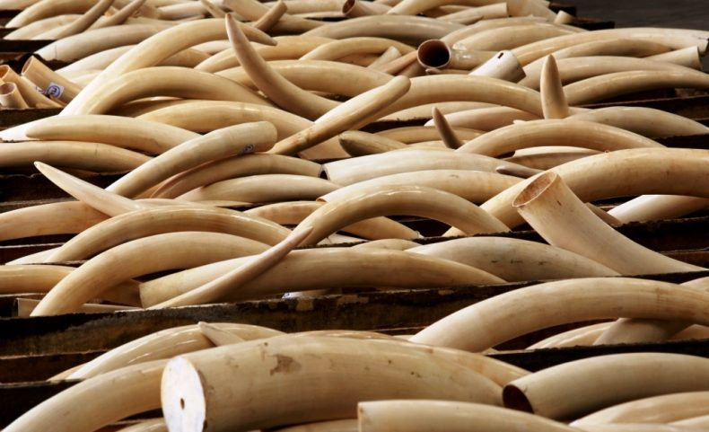 Malaysia goes after Ivory Smugglers