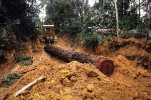Continued logging poses clear and present dangers to Malaysian forests. Photo Credit: MTC