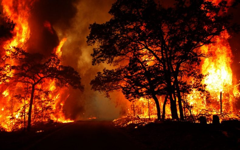 Muslim clerics in Indonesia issue a Fatwa against Forest Fires
