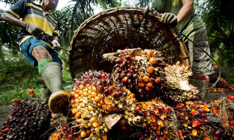 Palm Oil Buyers Beware! WWF's latest Scores on Companies are In