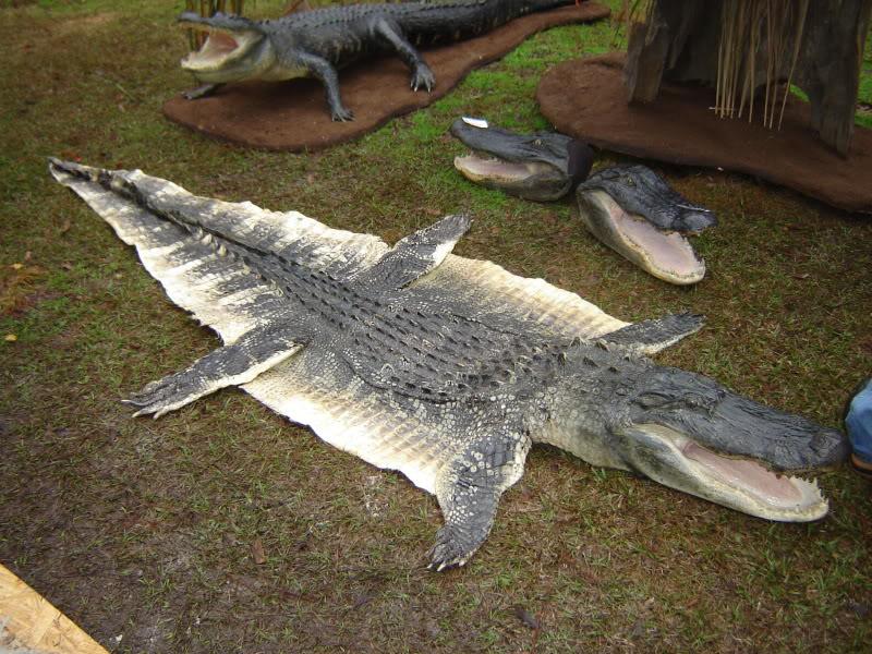 Sarawak S Crocs Are Now Fair Game Clean Malaysia