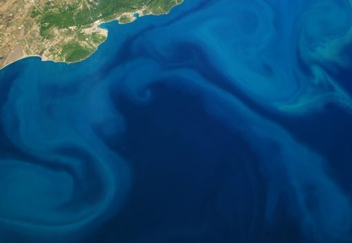 Plankton Bloom in the Ocean is a sign of Climate Change