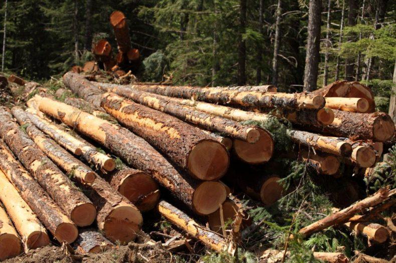Orang Asli in Kelantan are up in Arms over rampant Logging … Rightly So