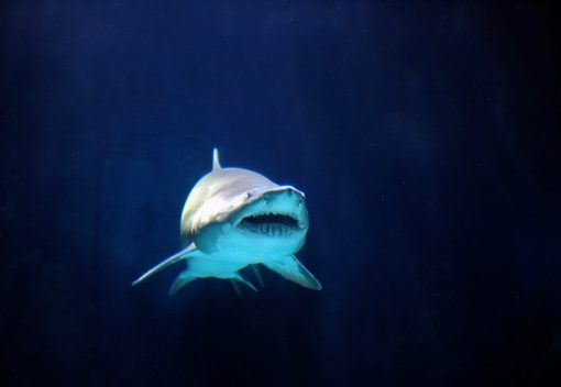 WWF: Malaysians are eating less Shark Fin Soup … At Last