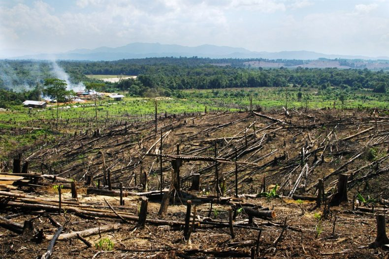 Wan Junaidi: Malaysia is 'committed' to Saving its Forests