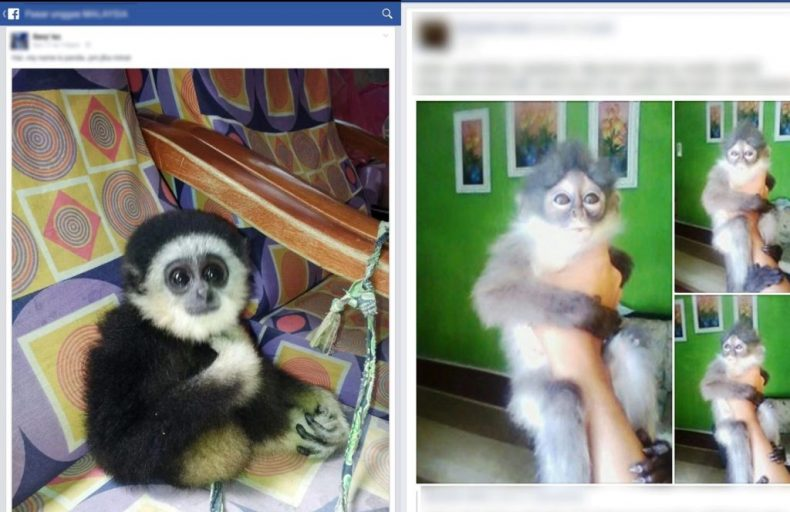 WJC: Facebook is home to 'Industrial-scale' Wildlife Trafficking