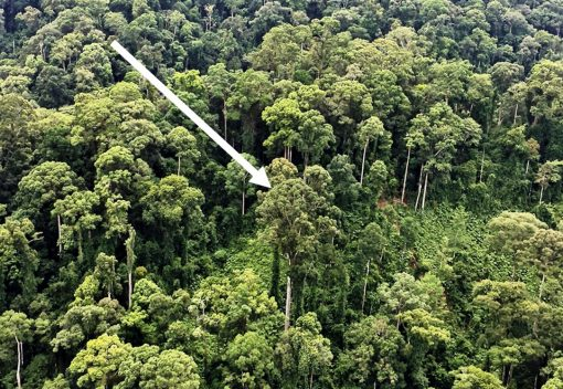 Meet the Tropic's latest Tallest Tree