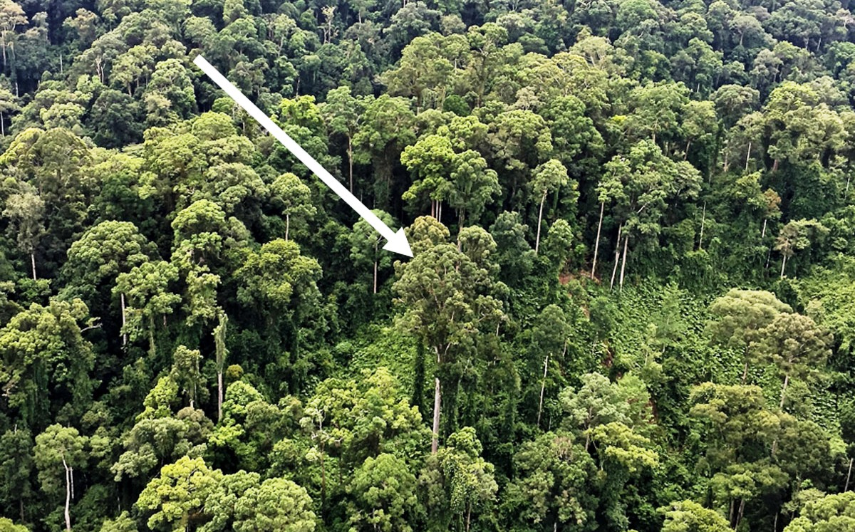Meet The Tropic S Latest Tallest Tree Clean Malaysia