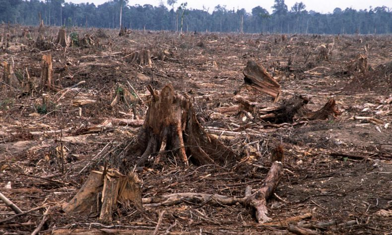 Wan Junaidi calls on States to stop Issuing Logging Licenses