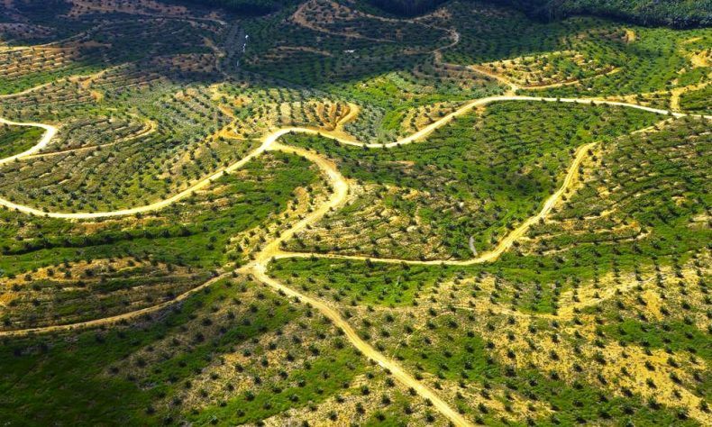 Palm Oil Watchdog comes in for Flak from Environmentalists