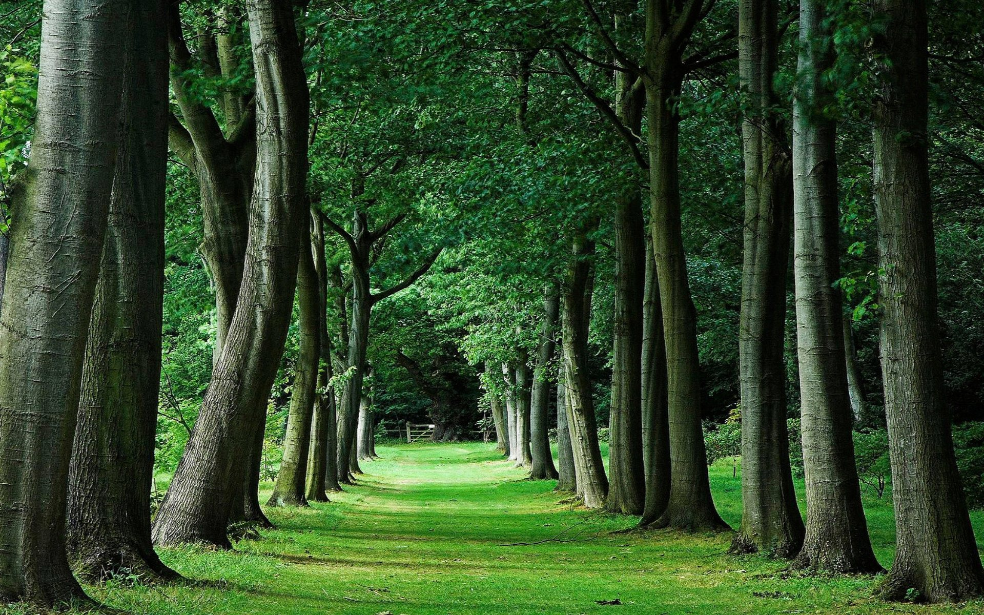 trees areas urban faster weird grow yes rural than pixabay forests protected whether must credit they
