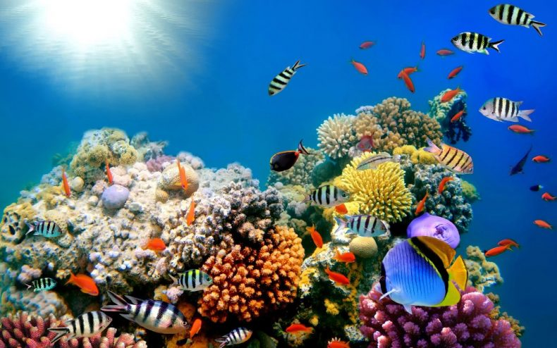 Our Coral Reefs 'aren't well Protected'