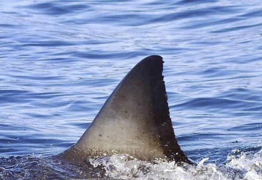 Hotels and Restaurants take Shark Fin Soup off Menus. So Must even More