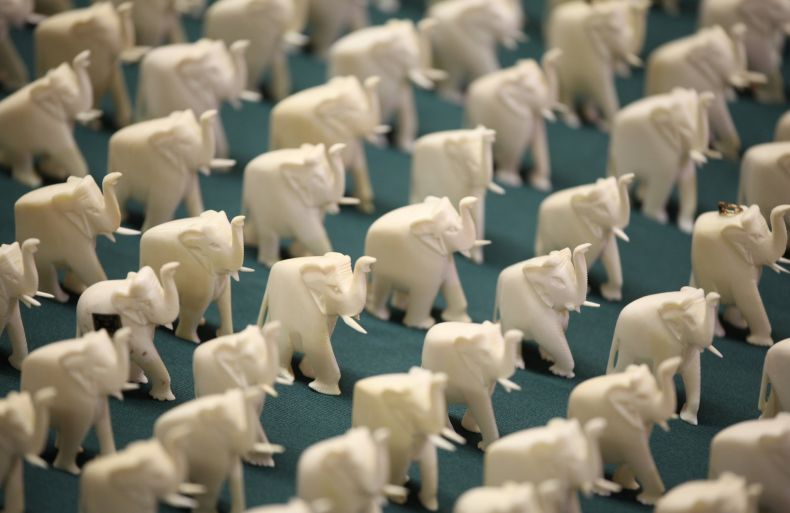 China plans to Ban the sale of all Ivory
