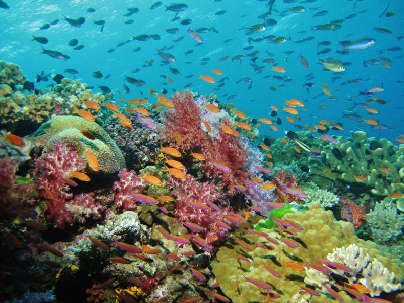 UN: Coral Reefs will be experiencing annual Mass Bleaching