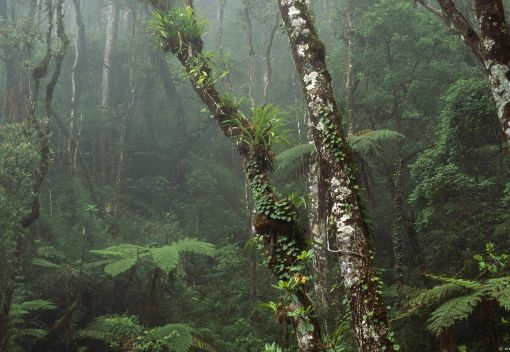 There'll be more 'Protected' Forests by 2020. Good, so Let's truly Protect Them