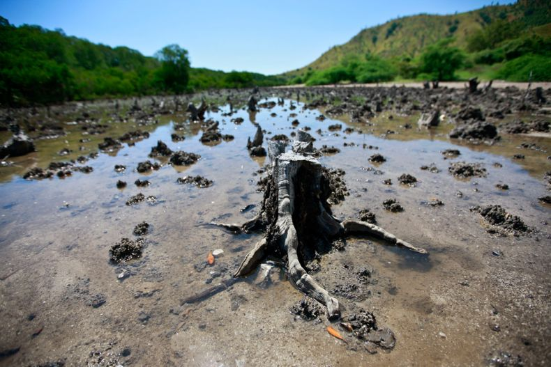 Mangroves are Uprooted in Penang