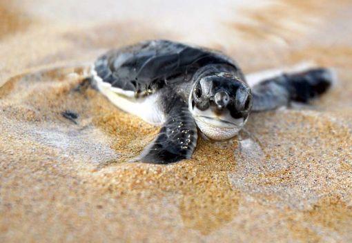 Saving Sea Turtles in Labuan
