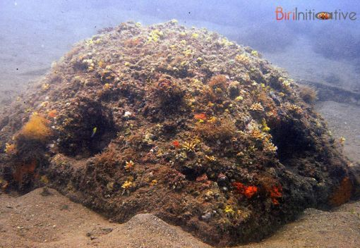 Marine life gains a new Lease on life at Artificial Reefs in the Philippines