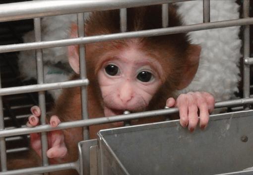 Time to get Tough on Animal Trafficking