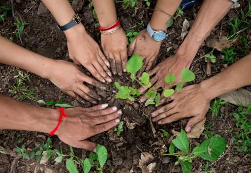 Plant yet more Trees in Shah Alam