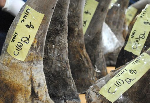 Rhino Horns continue to be Smuggled into Malaysia and Southeast Asia