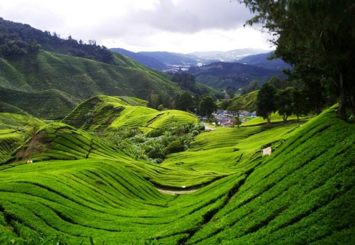 Stop befouling the Cameron Highlands