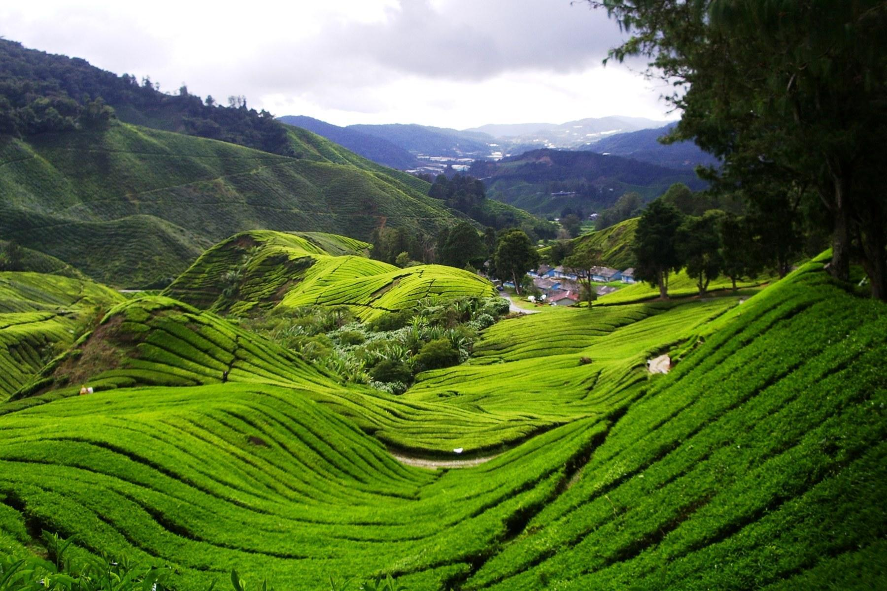 Malaysia Natural Resources And Environment