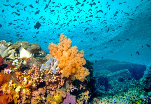Let's Let our Corals Save Themselves