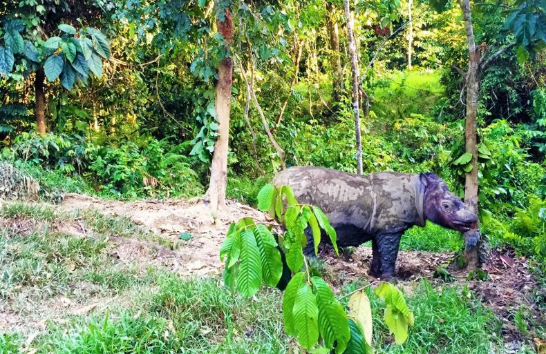 Puntung the Rhino will be Put Down