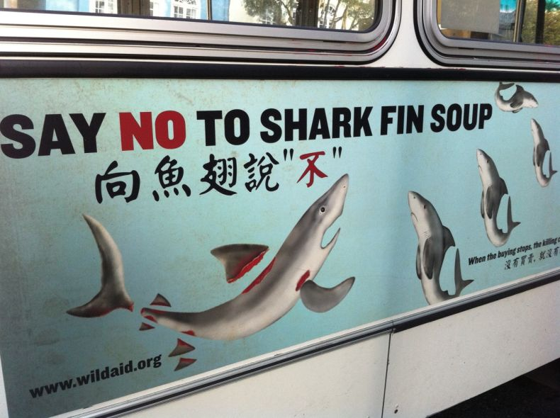'Stop Selling' and Buying Shark Fins