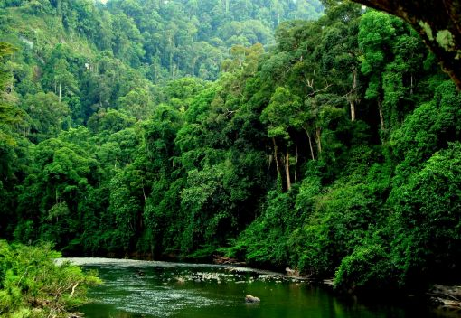 We 'Need to Protect' Sabah's Forests
