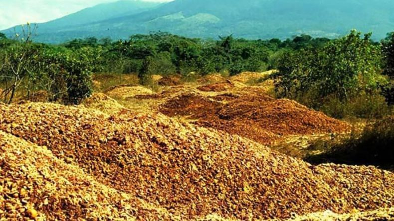 Fruit Waste Sprouts a Lush Forest