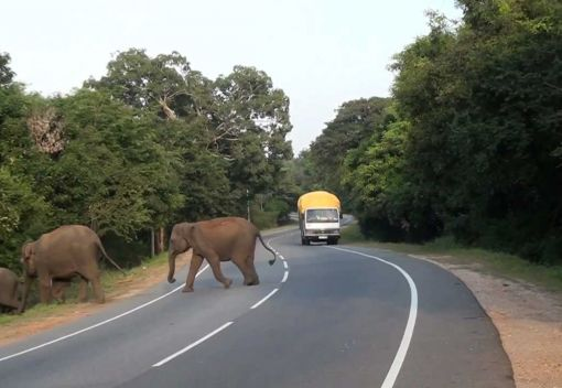 Another Elephant Dies on the East-West Highway. For Shame