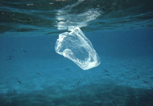 Going to Jail for Using Plastic Bags?