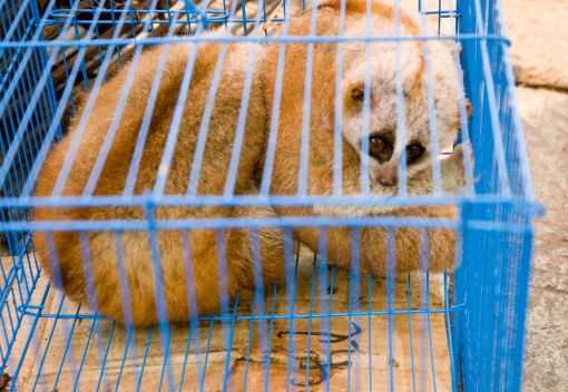 The Online Sale of 'Exotic' Animals Carries On. It must be Stopped