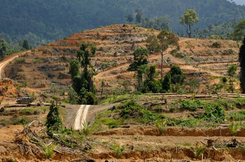 Malaysian Palm Oil Company agrees to Rehabilitate 1,000 hectares of Peatland