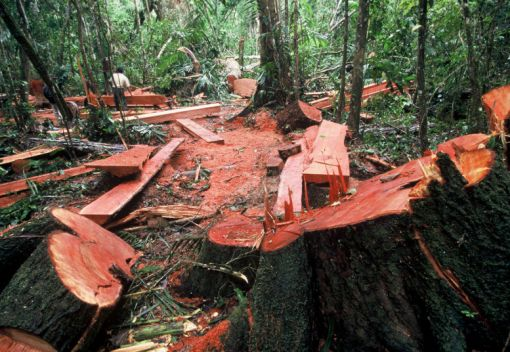 Illegal Loggers must be 'Deterred'