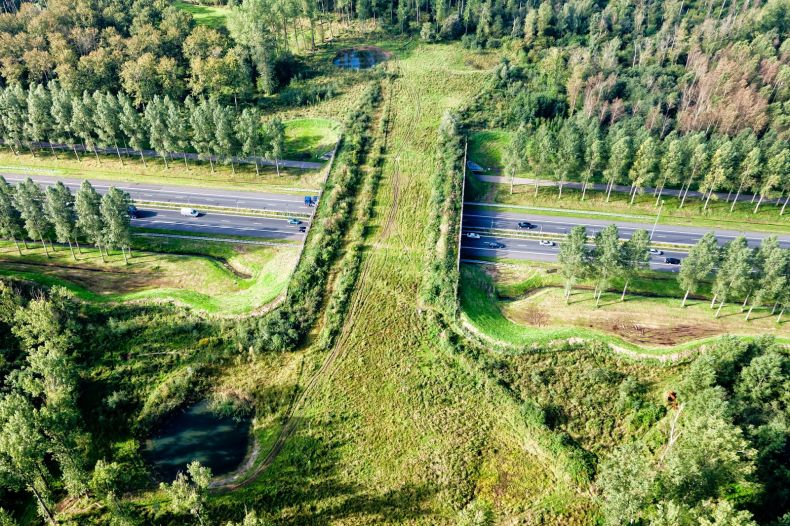 Building Wildlife Crossings to Save Animals from Ending  up as Roadkill