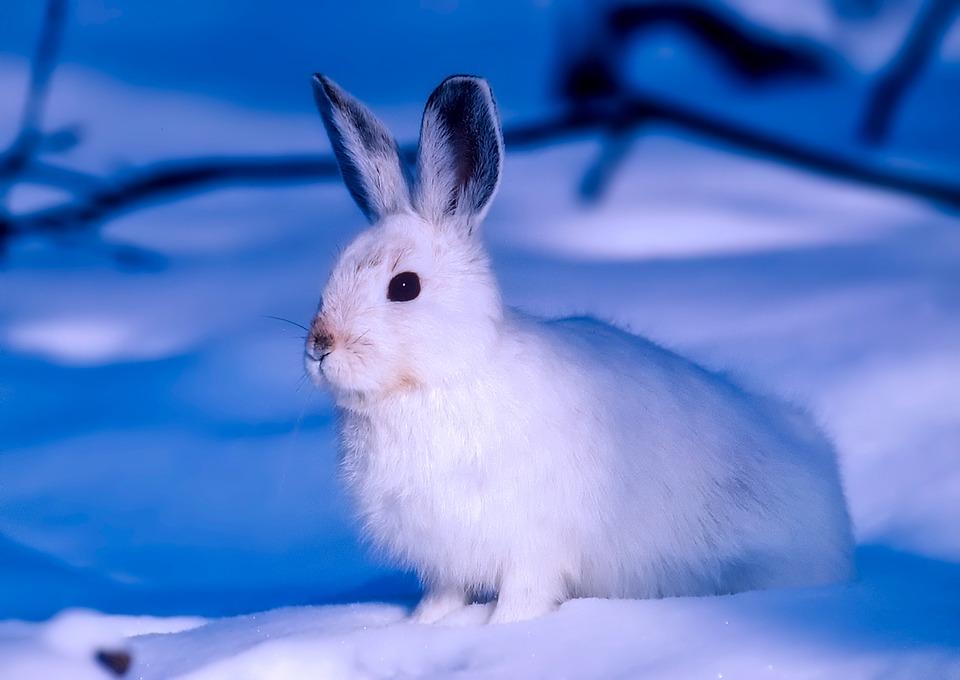 Tiere In Der Arktis
